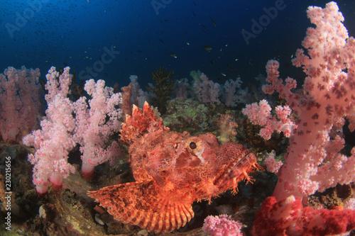 Spoed Foto op Canvas Onder water Scorpionfish fish on coral reef