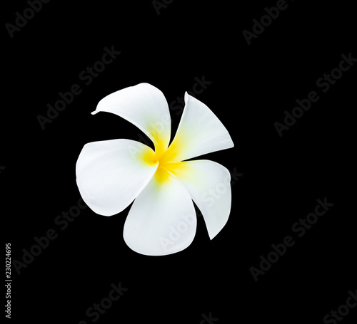 Deurstickers Frangipani Plumeria flower yellow isolated on black background and clipping path ( Common name pocynaceae, Frangipani , Pagoda tree, Temple tree )