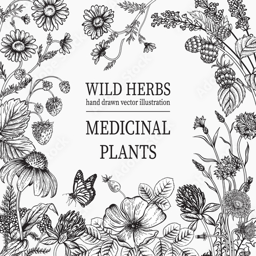 Wild flowers. Herbal tea. Vector illustration. Wall mural