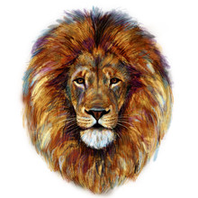 Digital Painting Of Male Lion ...