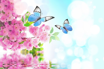 Panel Szklanybeautiful butterfly on pink flower, sky background
