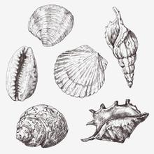 Hand Drawn Vector Illustrations - Collection Of Seashells. Marine Set.