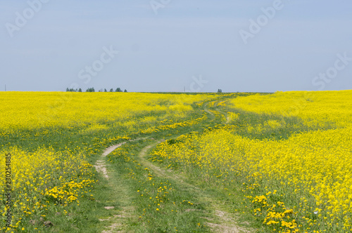 Deurstickers Platteland country road in a field of flowers