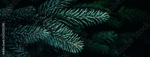 Fotografia Christmas  Background with beautiful green pine tree brunch close up