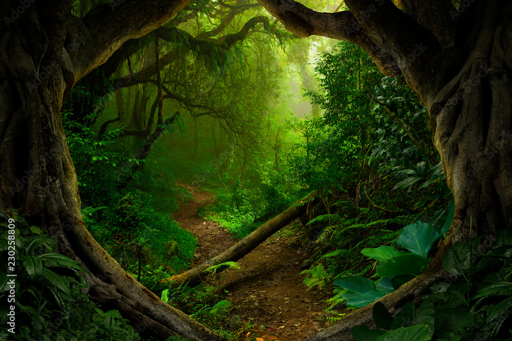 Fototapety, obrazy: Asian tropical rainforest