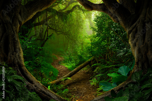Obraz Asian tropical rainforest - fototapety do salonu