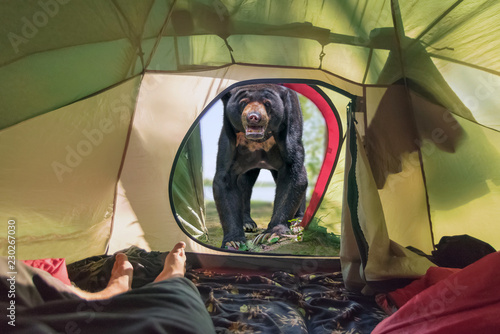 A huge aggressive bear near the entrance to the tourist tent Tablou Canvas