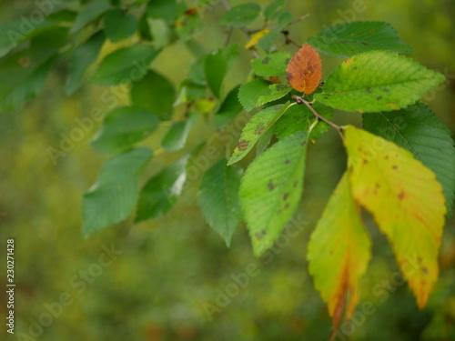 Fotografiet  Autumn