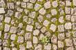 canvas print picture - Old cobblestone road with grass between stones. Texture and background.