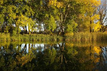 Symetryczne odbicia jesiennych drzew w wodzie w zachodzącym słońcu