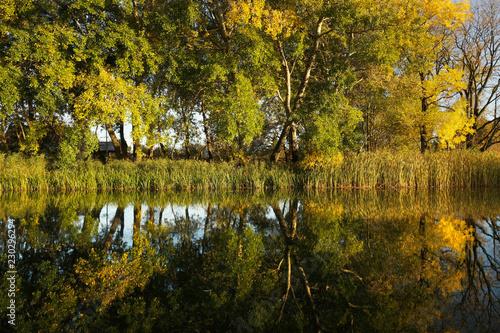Symetryczne odbicia jesiennych drzew w wodzie w zachodzącym słońcu - fototapety na wymiar