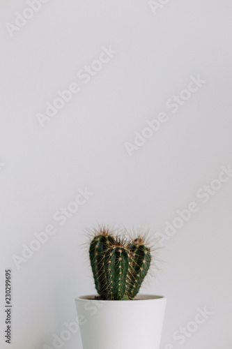 One cactus in front of a white wall