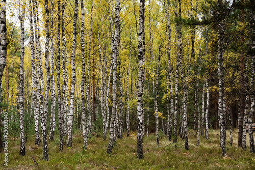 Jesienny krajobraz 17 - 230302843