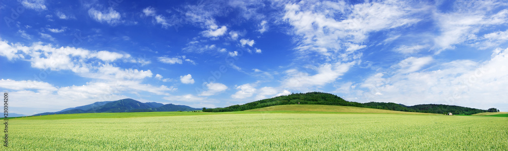 Fototapety, obrazy: Panoramic landscape, view of green fields and blue sky