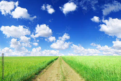 Landscape, dirty road among green fields, blue sky in the backgr