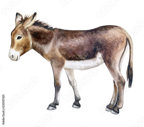 Photographie Donkey colorful isolated on white background