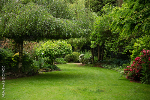 Slika na platnu View of lush green garden with willow tree, green lawn, no sky and no body in ga