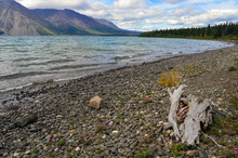 Driftwood On Lake Kathleen Sho...