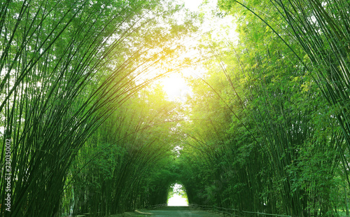 Bamboo tunnel and walkway in nature with sunlight through.