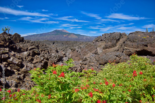 Red berry bushes on the edge of a ancient lava flow.