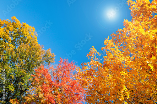 obraz PCV Golden, orange and red autumn foliage tree top leaves against sunny, blue sky. Copy space.