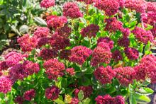 Bright Autumn Floral Natural B...