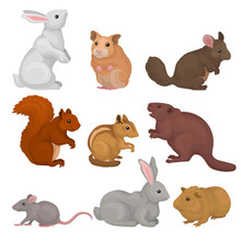 Cute Rodents Set, Small Wild A...