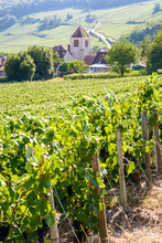 View Over The Small Village Of Bonneil, France, And Its Medieval Steeple In The Champagne Vineyard With Rows Of Grapevine In The Foreground And On The Hillside In The Background.