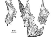 Bat Illustration, Drawing, Eng...
