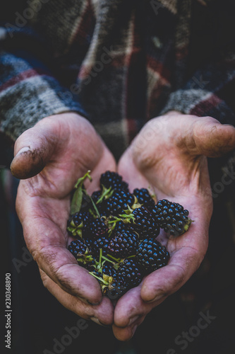 Farmer's hands with freshly harvested blackberries. Shallow depth of field.