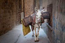 Donkey Scavenger On Mardin Street Turkey