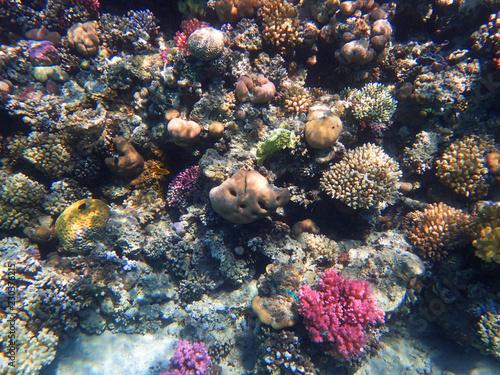 Staande foto Koraalriffen coral reef in Egypt