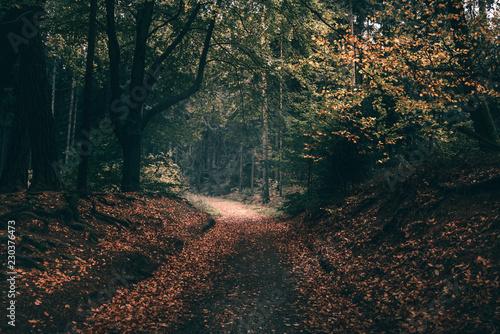 Valokuva  Waldweg im Herbst