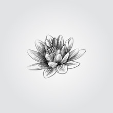 Hand Drawn Lotus Flower Sketch Symbol Isolated On White Background. Vector 