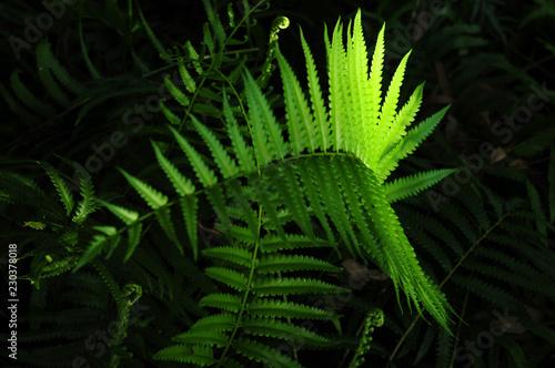 Staande foto Kameleon Tropical Fern Bushes green season.