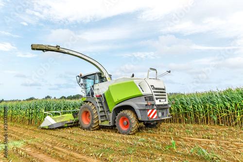Obraz na plátně récolte du maïs