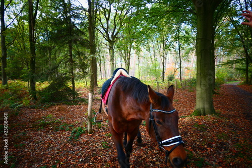 Printed kitchen splashbacks Horses Bruin paard gezadeld