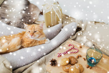 Pets, Hygge And Christmas Conc...
