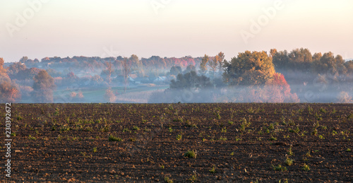 Poster Diepbruine Picturesque autumn landscape in the fog. Foggy morning autumn landscape in bright autumn colors of trees. Gentle foggy morning picture for calendar, greeting card, background