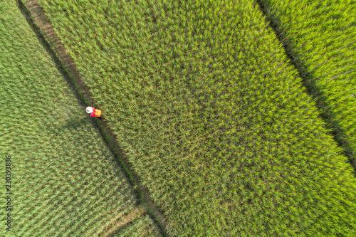 Foto auf Gartenposter Reisfelder Aerial view rice green field
