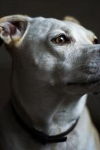Macro Bokeh Dog Portrait