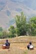 Dos mujeres de la etnia Hmong descansando en arrozales de Sa Pa Vietnam