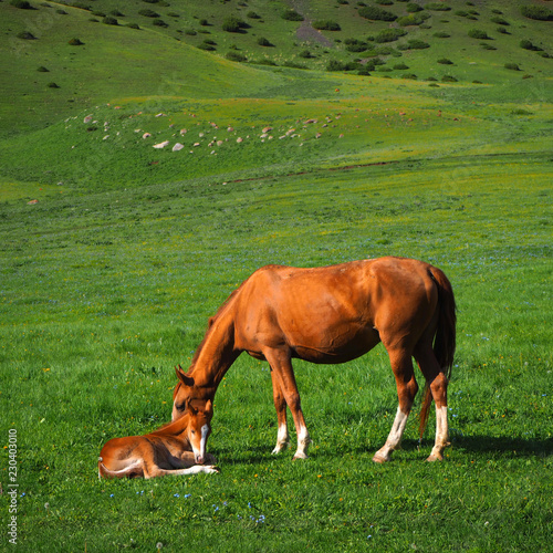 Fotografie, Obraz  Horse mother with son