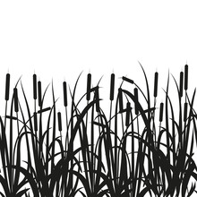 Sedge, Reed, Cane, Bulrush. Bl...