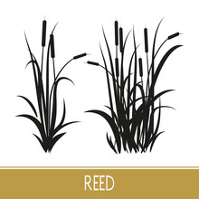 Sedge, Reed, Cane, Bulrush. S...