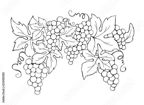 Grapes / Vector illustration, vintage design element Canvas