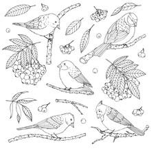 Hand Drawn Vector Set Of Birds...