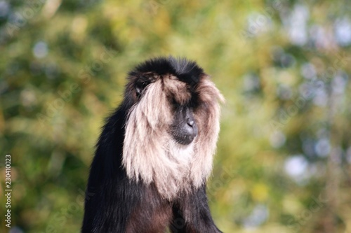 Photo Stands Kangaroo Macaque