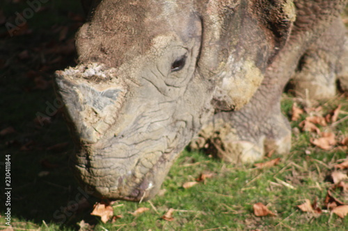 Photo  Rhinocéros