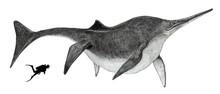 魚竜。後期三畳紀の北アメリカの海に生息。化石から体長は15メートルと想定され、カジキマグロのように長い嘴を持ったイクチオサウルスの仲間では最大。肉食で主にアンモナイトやオウムガイのような頭足類や魚を餌にしていた。イラストはその大きさから比較のためのダイバーを配し、クジラとカジキマグロのイメージで描いた。